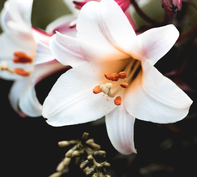 Att säga det med blommor